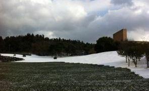 雪绿茶博物馆