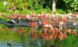 迈阿密动物园