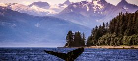 朱诺 观鲸最佳地点