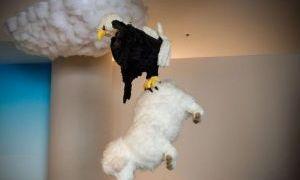泰迪熊野生动物世界