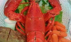 Reb Lobster