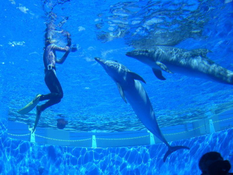 壁纸 海底 海底世界 海洋馆 水族馆 800_601