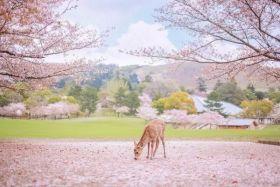 奈良 社寺之都