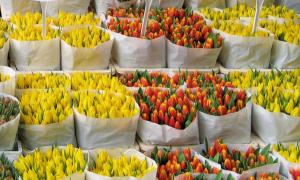 辛格鲜花市场