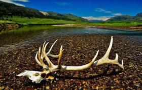 黄石国家公园 世界上第一个最大的国家公园   早晚温差大