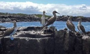 巴托罗梅岛